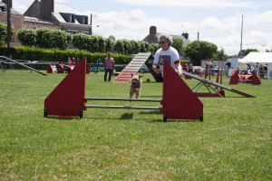 concours_agility_2015-10