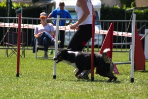 concours_agility_2015-100