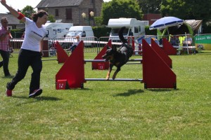 concours_agility_2015-101