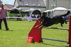 concours_agility_2015-103