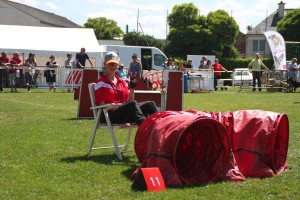 concours_agility_2015-104