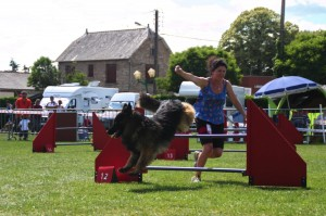 concours_agility_2015-105
