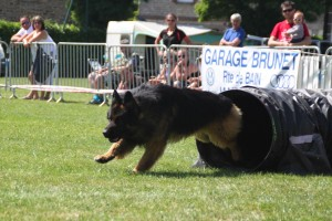concours_agility_2015-106