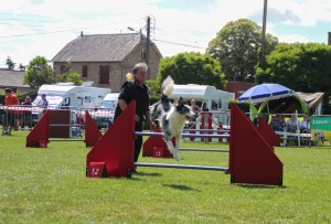 concours_agility_2015-107