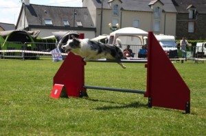 concours_agility_2015-109