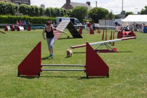 concours_agility_2015-11