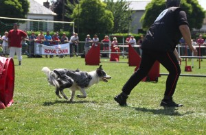 concours_agility_2015-110