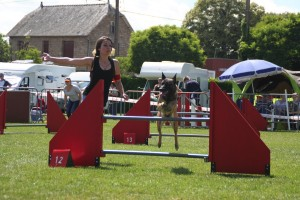 concours_agility_2015-111