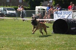 concours_agility_2015-113