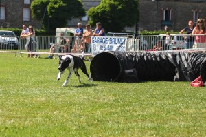 concours_agility_2015-114