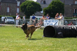 concours_agility_2015-115