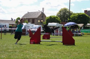 concours_agility_2015-116