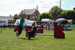 concours_agility_2015-117