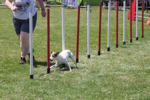 concours_agility_2015-12