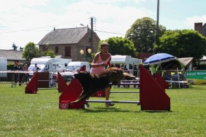concours_agility_2015-120