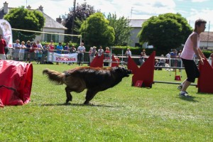 concours_agility_2015-121