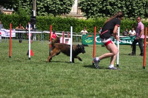 concours_agility_2015-122