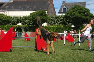 concours_agility_2015-123