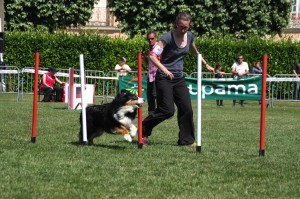 concours_agility_2015-124