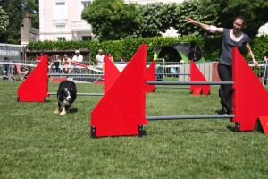 concours_agility_2015-125