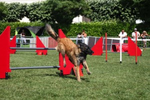 concours_agility_2015-126