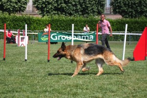 concours_agility_2015-127