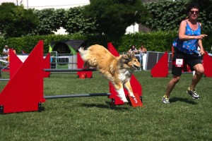 concours_agility_2015-129