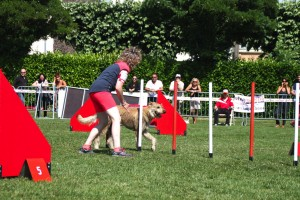 concours_agility_2015-130