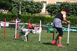 concours_agility_2015-131