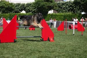 concours_agility_2015-133