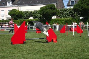 concours_agility_2015-134