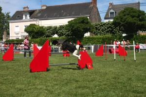 concours_agility_2015-135