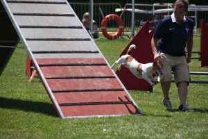 concours_agility_2015-14