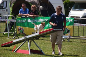 concours_agility_2015-15