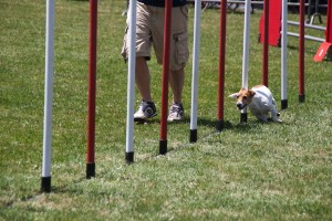concours_agility_2015-16