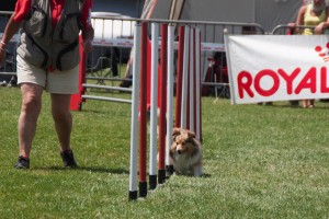 concours_agility_2015-17