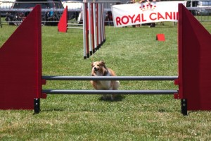 concours_agility_2015-18