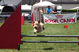 concours_agility_2015-19