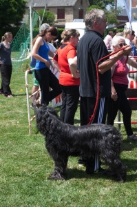 concours_agility_2015-2