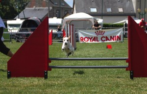 concours_agility_2015-20